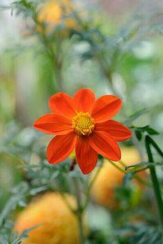 Earth, Spring, Flowers, Plants, Naturaleza, Florals, Planters, Flower, Blossoms
