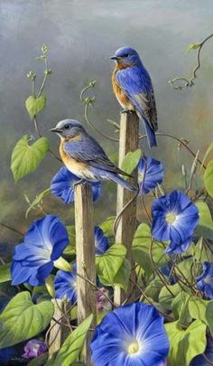 Blue Birds and morni Amazing World beautiful amazing ""