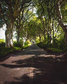 Walking through the Kingsroad from the Castle Black to King's Landing. . Follow me @patrick.jarina . #travelling #traveler #travelblogger #travelholic #traveladdict #travelphotography #ireland #northernireland #got #gameofthrones #kingsroad #darkhedges #adventure #trees #naturephotography #nature #wanderlust #wanderers #tourist #photooftheday #photographers #photograph #landscapephotography #photos #potd #adventures #travelgram #instaphoto #instapic #road Landscape Photography, Nature Photography, Travel Photography, Black Castle, King's Landing, Insta Pic, Repeat, Travelling, Photographers