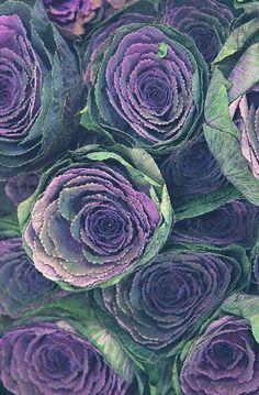 Flower Market Series: Ornamental Cabbage