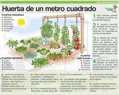 Huerta de 1 Metro 2