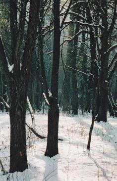"""""""No podía existir un lugar más recóndito e inexpugnable que aquel solitario bosque en donde quedó abrazado a la furia de la nieve."""" Libro 1."""