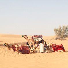 Camel parking #dubai #desert #safari