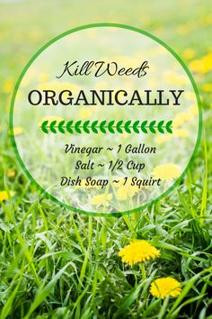 Kill Dandelion and all kinds of Weeds Organically with 3 Household Items (Don't get it on the grass or other wanted plants).