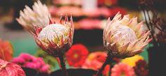 Virginia Flower and Garden Expo |