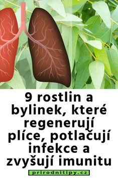 9 rostlin a bylinek, které regenerují plíce, potlačují infekce a zvyšují imunitu