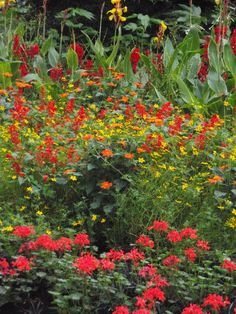 Jardines en Hyde park. Londres