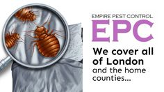 http://www.empirepestcontrol.co.uk/bedbug-control-london  We here at Empire Pest Control have made you this new, amazing video all about how we can help you with a bed bug infestation. If you've ever had a problem with bed bugs, or are currently experiencing one, this video will give you everything you need to know about what we can do for you.