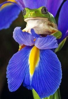 Iris | Cutest Paw