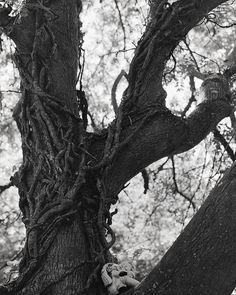 Black and white makes anything spooky. Shot on bergger panxro 400 in a Canon EOS 3000v. . . . . #bnw_demand #bnwmood #monochrome #bnw_globe #blackandwhitephoto #rsa_bnw #blackandwhitephotography #blacknwhite_perfection #bnw_captures #bnw_life #bnw_rose #nature_brilliance #artofvisuals #natureaddict #naturediversity #ourplanetdaily #instanaturelover #nature_prefection #irland #inspireland_ #loveireland #loves_ireland #ig_ireland #staybrokeshootfilm #reco_ig #believeinfilm #irishexplorer… Love Ireland, Canon Eos, Black And White Photography, Monochrome, Irish, Globe, Nature, Prints, How To Make