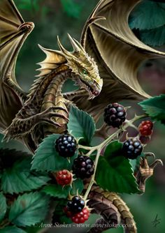 Blackberry Dragon by Anne Stokes