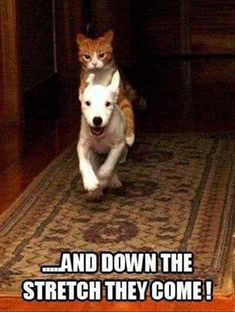 Funny Animal Pictures 23 Pics