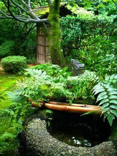 Fern, moss, shade, bamboo gate and a beautiful stone water basin.  All my ideas of a Japanese garden in one small space.