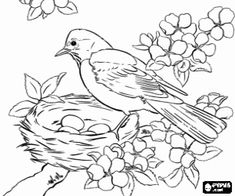 The Bird Is Taking Care Of Eggs In Nest Coloring Page