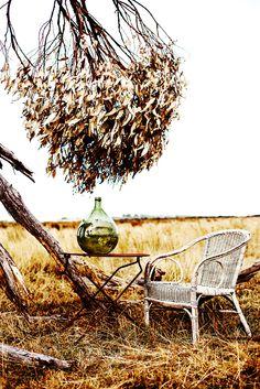 Australian bush entertaining Styling and Photography ©Kara Rosenlund