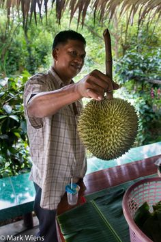 Durian Garden of Eden - Eating the King Of Fruits in Nonthaburi http://migrationology.com/2014/07/durian-farm-thailand/
