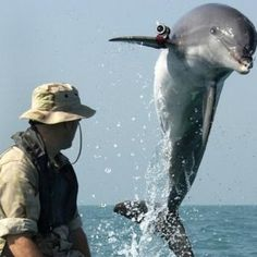 US Navy Dolphin...the dolphin weapons are real. These dolphins are trained at the sub base in San Diego.