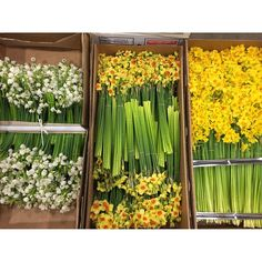 I bought an entire box of Scilly Isles Narcissi for my Easter decorations at Covent Garden Flower Market yesterday and now my house smells divine