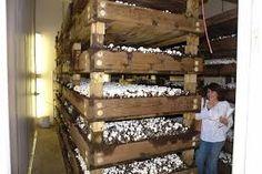 Resultado de imagen para cultivo vertical de hongos