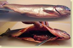 How To Gut A Fish, step by step w/pictures