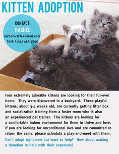 Kitten Adoption Flyer by Ka Man Lee, via Behance