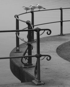 Gulls, Photo by Karl Seitinger 2014 Gulls, Utility Pole, Bregenz