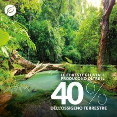 Le foreste pluviali producono oltre il 40% dell'ossigeno terrestre. #rainforest