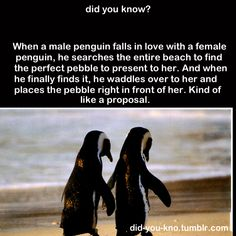 """Reminds me of the movie I used to love when I was little, """"Pebble and the Penguin"""""""