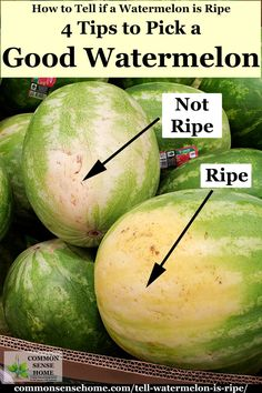 Easy tips to teach you how to tell if a watermelon is ripe – PLUS – I'll tell you how to store a watermelon for best flavor and nutrition. for beginners berries How to Tell if a Watermelon is Ripe - 4 Tips to Pick a Good Watermelon Watermelon Ripeness, Watermelon Plant, Sweet Watermelon, Watermelon Hacks, Watermelon Slicer, Ripe Fruit, Fresh Fruit, When To Pick Watermelon, Picking Watermelon