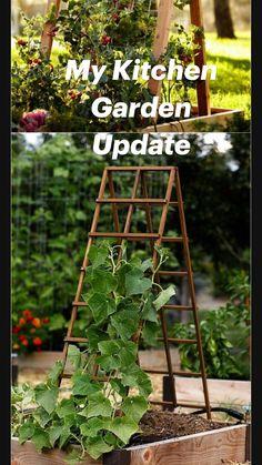 Diy Trellis, Garden Trellis, Garden Planters, Garden Yard Ideas, Garden Beds, Diy Garden Projects, Patio Ideas, Gemüseanbau In Kübeln, Container Gardening Vegetables