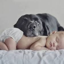 Image result for baby Photography with dog