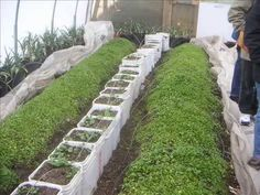 You Can Grow Food in the Snow - A Visit to Will Allen's Growing Power - YouTube