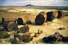 MONUMENTO NATURAL BOSQUES PETRIFICADOS - SANTA CRUZ - CHILE POST™