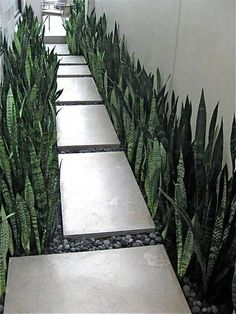41 Stunning Front Yard Walkway Landscaping Design Ideas - Landscape design is simple once you are used to it. Now we will explore a few of these designs and - Modern Landscaping, Front Yard Landscaping, Landscaping Ideas, Walkway Ideas, Pavers Ideas, Backyard Patio, Patio Wall, Mulch Landscaping, Black Rock Landscaping