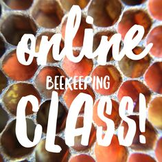 Online Intro to Beekeeping Class! Now streaming! Great for beginners or intermediate level beekeepers.