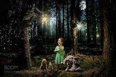 walking in wood by erwannmartin35