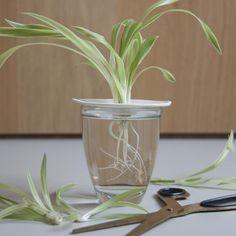 germinatore small in ceramica - R nel bosco - Reggio Emilia