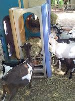 Our Old/Used/New Playground/Hay Feeder/Nesting Box