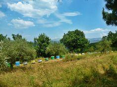 Το μελισσοκομείο στα Όρη του Βάλτου στη νότια Πίνδο. Εδώ από τις μελιτώδεις εκκρίσεις της βελανιδιάς, σε συνδυασμό με τις νεκταροεκκρίσεις της καστανιάς προκύπτει ένα πολύ σκοτεινό, σχεδόν μαύρο παχύρρευστο μέλι, πολύ υψηλής θρεπτικής αξίας.