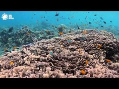 Amed Bali: Scenic Drives, Volcanic Beaches, Colorful Diving
