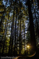"Vancouver Island, Nanaimo, ""real trees"" per my husband, Sunset, Laryssa's Photography"