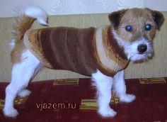 Мастер класс: как связать свитер для собаки спицами