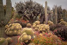 Inspiration: Desert garden #desert #xeriscape