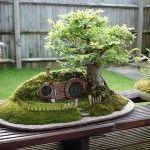 Lindo e Criativo Bonsai