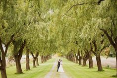 I keep seeing photos like this. Long row of willow trees, where do you really exist?
