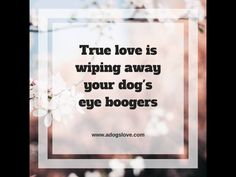 I wish I could still clean your eyes Fajy boy. Mommy misses you so much All Dogs, I Love Dogs, Puppy Love, Best Dogs, Dog Rules, My Animal, Dog Mom, Dog Life, Fur Babies