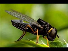 Robot bees are being developed at Harvard University. Roboticists have long used insects, fish and small animals as ideal models for building small robots leading to innovations in areas including . Drone Technology, Futuristic Technology, Technology Gadgets, Tech Gadgets, Cool Gadgets, Technology World, Cool Technology, Drones, Drone Quadcopter