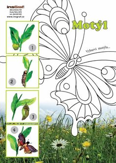 Motýl Very Hungry Caterpillar, Bugs And Insects, Life Cycles, Games For Kids, Montessori, Plant Leaves, Butterfly, Quilts, Nature