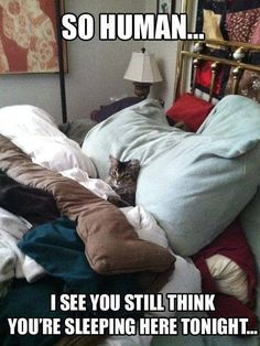Very interesting post: TOP 35 Funny Cats and Kittens Pictures. Also dompiсt.сom lot of interesting things on Funny Animals, Funny Cat.