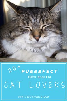 Unique and amazingly memorable cat-themed gift ideas that include DIY projects, great cat products, ideas for experiences and a list of charities that benefit felines! Enjoy browsing these ideas to make finding the perfect gift so much easier! You can find more gift ideas based on a person's interests and hobbies at giftergrid.com!